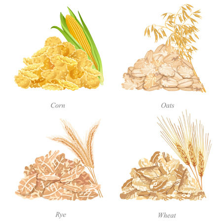 Illustration pour Batches of corn, oats, rye and wheat flakes, ears and names - image libre de droit