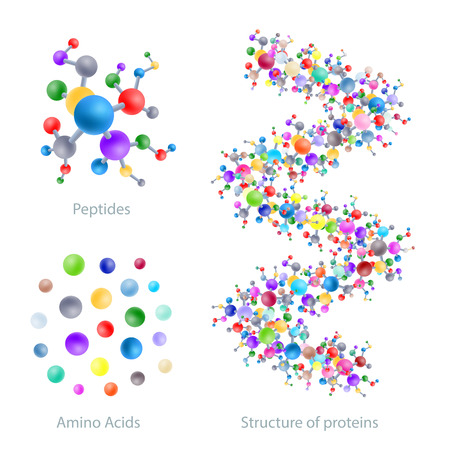 Illustration pour Structure of protein, peptides, amino acids, vector illustration - image libre de droit