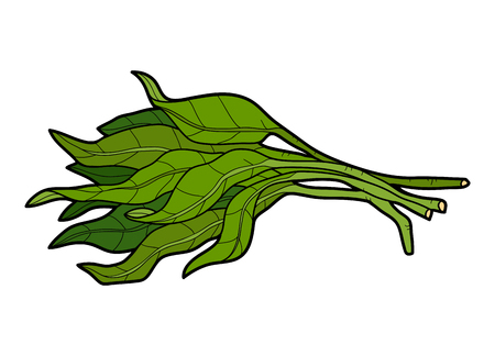 Photo for Vector color illustration, colorful vegetables, Water spinach - Royalty Free Image