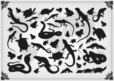Amphibian reptile illustration collection background
