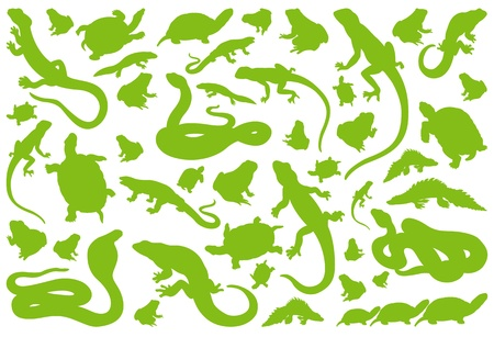 Amphibian reptile environmental illustration collection background vector