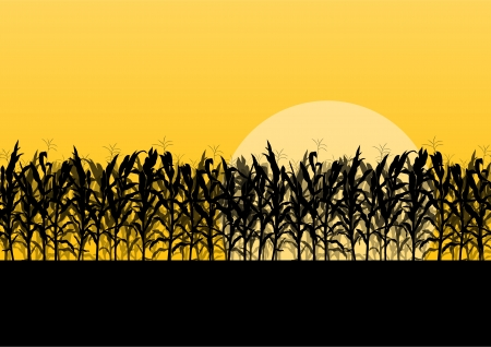Illustration pour Corn field detailed countryside landscape illustration background vector - image libre de droit