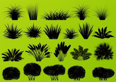 Illustration pour Exotic jungle bushes grass, reed, palm tree wild plants detailed silhouettes illustration collection background vector - image libre de droit