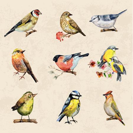 Illustration pour vintage a collection of birds. watercolor painting - image libre de droit