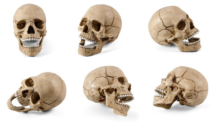 Photo pour Six plastic human skulls with open jaws at various angles isolated on white background - image libre de droit