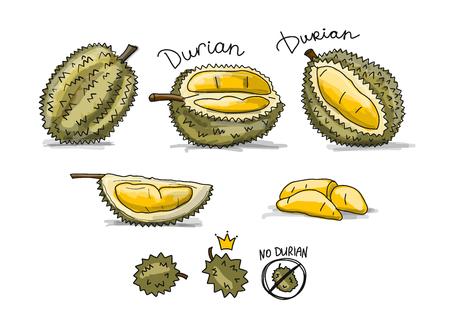 Ilustración de Durian, sketch for your design - Imagen libre de derechos