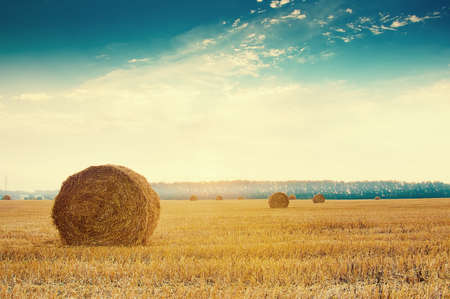Foto de Round straw bales in russian fields on sunset and blue sky - Imagen libre de derechos