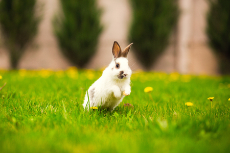 Photo for Easter rabbit jumping on the green grass - Royalty Free Image