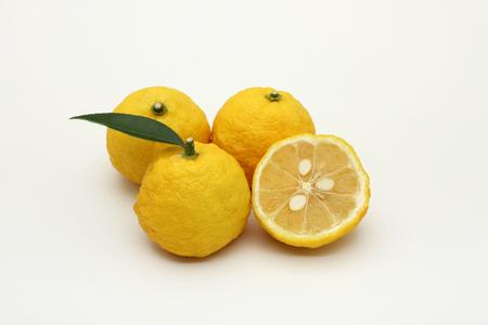 Foto de Yuzu citrus - Imagen libre de derechos