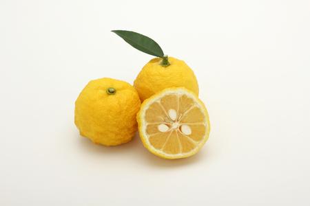 Photo for Yuzu citrus - Royalty Free Image