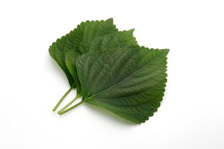 Photo pour perilla leaf, egoma - image libre de droit