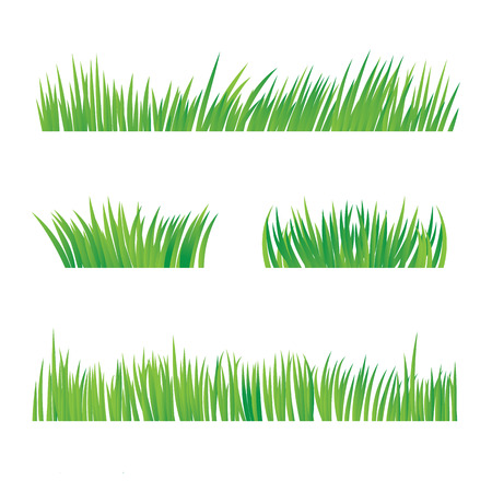 Illustration pour Green Grass, Isolated On White Background, Vector Illustration - image libre de droit