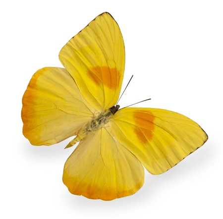 Photo for Yellow butterfly isolated on white - Royalty Free Image