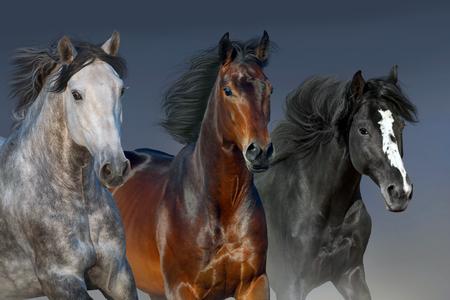 Photo pour Horses portrait run isolated on dark background - image libre de droit