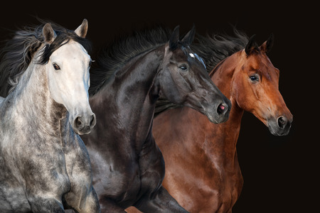 Photo pour Horse herd portrait in motion on dark background - image libre de droit