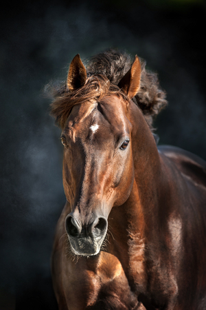 Photo pour Red horse with long mane portrait in motion on dramatic dark background - image libre de droit