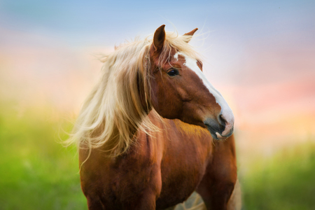 Photo for Red horse portrait at sunrise - Royalty Free Image