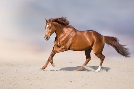 Photo pour Red stallion in motion in desert dust against beautiful sky - image libre de droit