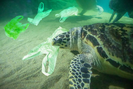 Foto de Sea Turtle eat plastic bag ocean pollution concept - Imagen libre de derechos