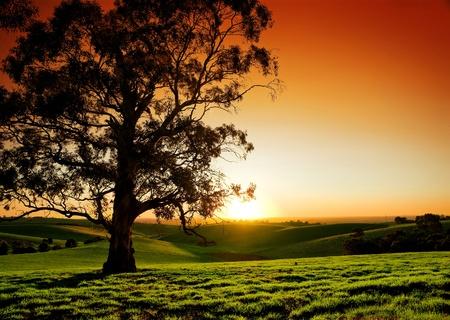Photo pour Beautiful Sunset over a rural meadow - image libre de droit