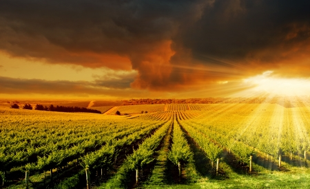 Photo pour A Beautiful Sunset over an Adelaide Hills winery - image libre de droit