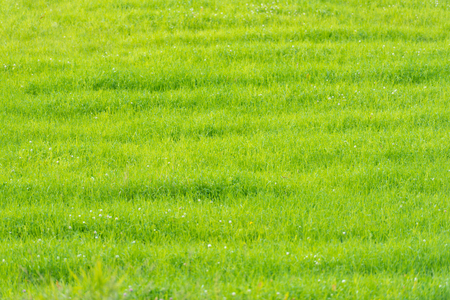 Photo pour Green grass field in Scandinavia, Norway. - image libre de droit