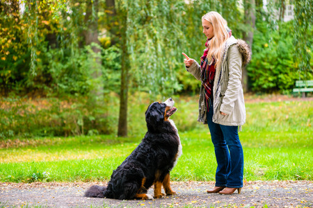 Photo pour Girl in autumn park training her dog in obedience giving the sit command - image libre de droit