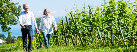 Photo pour Senior couple, woman and man, having walk in vineyard - image libre de droit