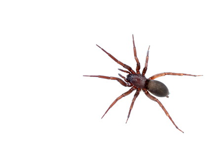 Photo for spider on white background - Royalty Free Image