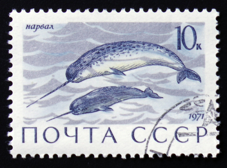 Foto de MOSCOW, RUSSIA - FEBRUARY 12, 2017: a post stamp printed in the USSR shows Enhydra lutris animal, the series - Imagen libre de derechos