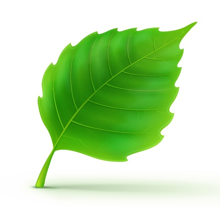 illustration of cool green detailed leaf