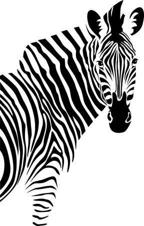 Illustration pour Zebra. Isolated  on white background - image libre de droit