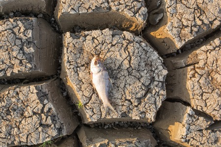Photo pour Died Fish in a dried up empty reservoir or dam due to a summer heatwave, low rainfall, pollution and drought in north karnataka,India. - image libre de droit