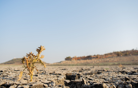 Foto de Dead Trees in the a dried up empty reservoir or dam during a summer heatwave, low rainfall and drought in north karnataka,India. - Imagen libre de derechos