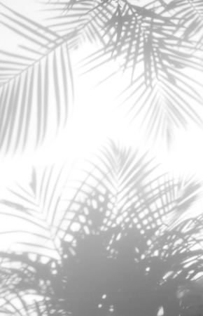 Photo pour abstract background of shadows palm leaves on a white wall. White and Black - image libre de droit