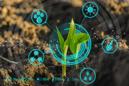 Photo pour Growing young maize seedling in cultivated agricultural farm field with modern technology concepts - image libre de droit