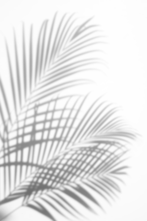 Photo pour abstract background of shadows palm leaf on a white background. White and Black - image libre de droit