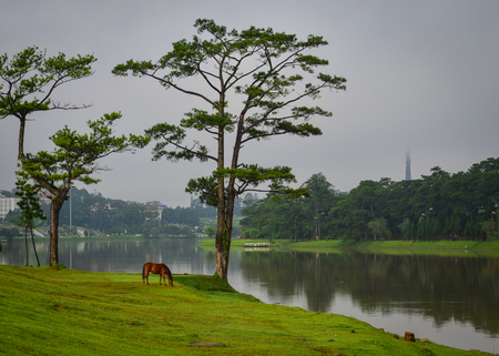 Photo for A horse standing on grass near the lake in Highland, Vietnam. - Royalty Free Image