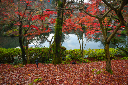 Photo for Autumn garden with a lake and many maple trees. - Royalty Free Image