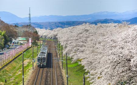 Foto de Miyagi, Japan - April 14, 2019. Landscape scenic view of Tohoku train with full bloom of sakura (cherry blossom). - Imagen libre de derechos