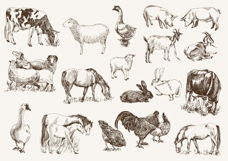 Foto de farm animals. set of vector sketches on a white background - Imagen libre de derechos