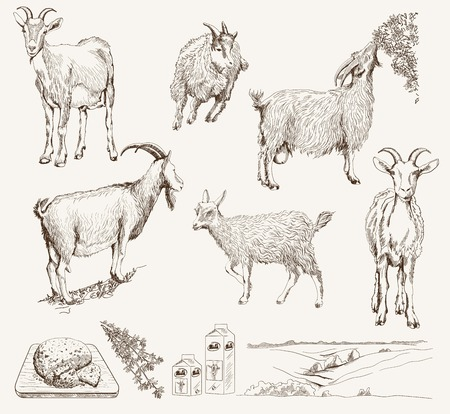 Illustration for vector sketch of a goat made by hand - Royalty Free Image