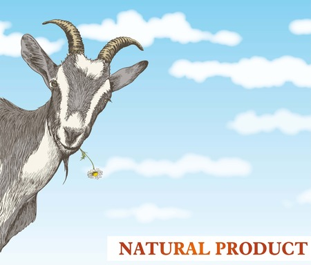 Illustration for goat looks out from behind a corner against a beautiful blue sky with white clouds - Royalty Free Image