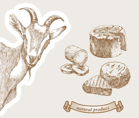 Illustration for Goat peeking from the corner and natural products which produced from goats milk - Royalty Free Image