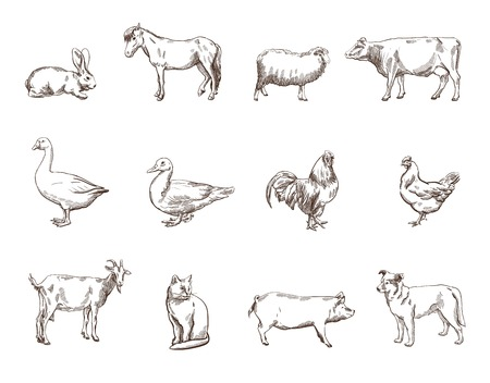 Illustration for Vector sketch of twelve farm animals silhouette - Royalty Free Image