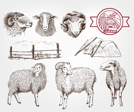 sheep breeding. set of sketches made by hand