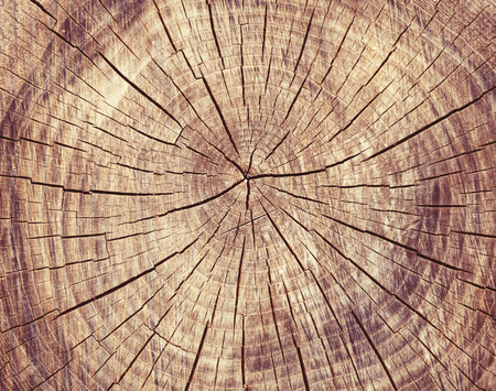 Photo for Wooden cut rexture, tree rings - Royalty Free Image