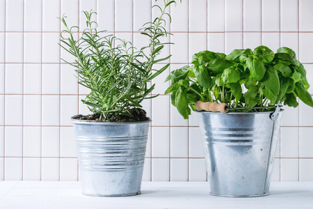 Photo pour Fresh herbs Basil and Rosemary in metal pots over kitchen table with white tiled wall at background. - image libre de droit