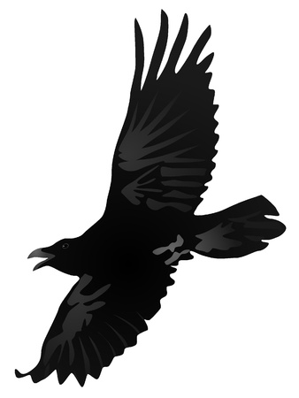 Illustration for Vector drawing a flying crow - Royalty Free Image