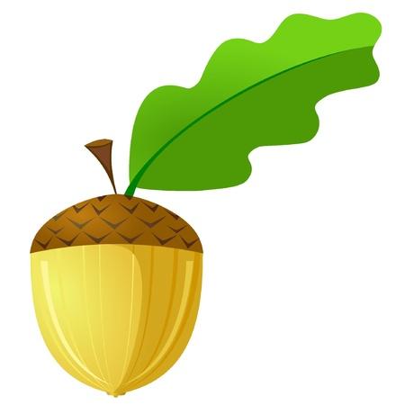 Illustration pour Vector illustration of an acorn is not a white background - image libre de droit